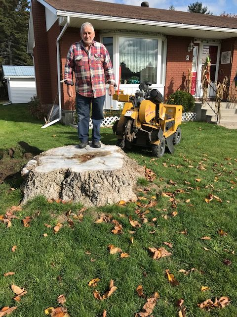 Before: man standing on top of tree stump being removed