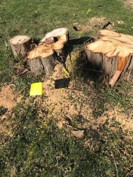 view of tree stump